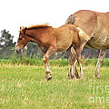 A Mare And Her Colt by Penny Neimiller