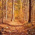 Autumn Trail by Brian Jannsen