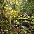 Beauty Creek by Idaho Scenic Images Linda Lantzy
