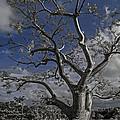Ghost Tree by Debra and Dave Vanderlaan