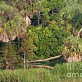 Green Cay Wetlands, Fl by Mark Newman