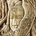 Head Of Buddha Ayutthaya Thailand by Colin and Linda McKie