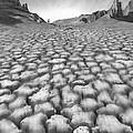 Long Walk by Mike McGlothlen