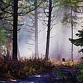 Morning Mist Print by Donna Duckworth