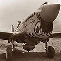 P-40 Warhawk by War Is Hell Store