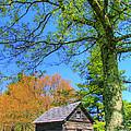 Puckett's Cabin by Paul Johnson