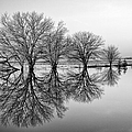 Reflection by Tom Druin