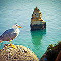 Seagull On The Rock by Raimond Klavins