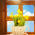 Spring Window by Amanda And Christopher Elwell