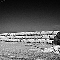 stack of frozen snow covered hay bales in a field Forget Saskatchewan Canada by Joe Fox