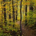 The Magic Forest  Print by Saija  Lehtonen