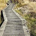 Wetland Walk by Les Cunliffe