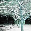 Winter Trees by Guy Ricketts