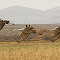 3 By 3 The Cranes Th...