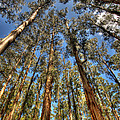 Dandenong Forest by Colin Woods