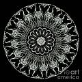 Kaleidoscope Ernst Haeckl Sea Life Series Black And White Set On by Amy Cicconi