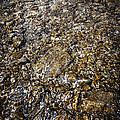 Rocks In Water by Elena Elisseeva