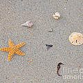 Sea Swag Print by Al Powell Photography USA
