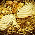 Seashell in stone Print by Raimond Klavins