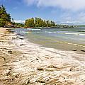 Coast Of Pacific Ocean On Vancouver Island by Elena Elisseeva