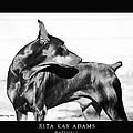 Watchful by Rita Kay Adams