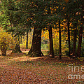 Autumn by Angela Doelling AD DESIGN Photo and PhotoArt