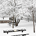 Winter Park by Elena Elisseeva