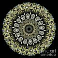 Kaleidoscope Ernst Haeckl Sea Life Series by Amy Cicconi