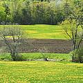 Spring Farm Landscape With Dandelion Bloom In Maine by Keith Webber Jr