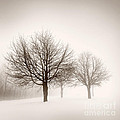 Winter Trees In Fog by Elena Elisseeva