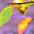 A Branch With Leaves by Toppart Sweden