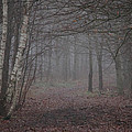 A Chill In The Trees by Odd Jeppesen