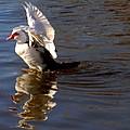A Ducky Landing