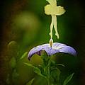 A Fairy In The Garden by Rebecca Sherman