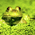 A Frogs Day by Optical Playground By MP Ray