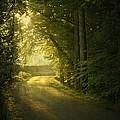 A Path To The Light by Evelina Kremsdorf