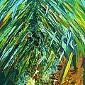 A Poppin Pineapple by Eloise Schneider