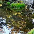 A Quiet Little Pond Print by Ira Shander