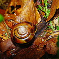 A Slow Snail by Jeff Swan