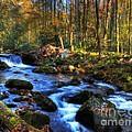 A Smoky Mountain Autumn by Mel Steinhauer