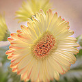 A touch of Sunshine Print by Paul and Fe Photography Messenger