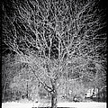 A Tree In The Snow by John Rizzuto