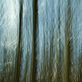 A Walk In The Woods IIi by Bob Retnauer
