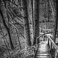 A Walk Through The Woods by Scott Norris