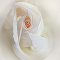 Abstract Pastel Rose Flower by Jennie Marie Schell