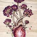 Aeonium Heart Print by Fay Helfer