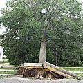Aftermath Of Hurricane Irene by John Telfer