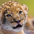 Age Of Innocence by Ashley Vincent