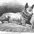Alaskan Husky by Granger