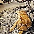 Alley Cat Siesta In Grunge by Meirion Matthias